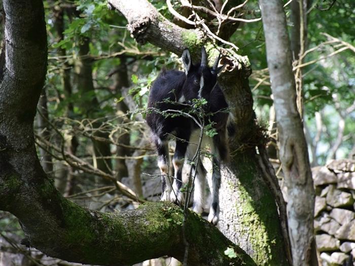 Goat_gorge